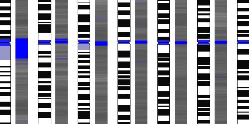 ДНК-радио