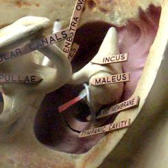 Код уха твоего