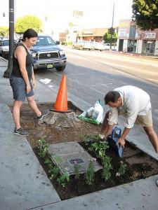 Партизанское озеленинение в Лос-Анджелесе